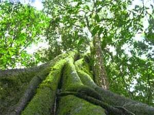 Considerações sobre o novo Código Florestal