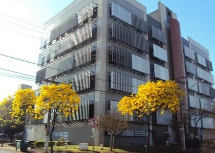 Ipê enfeita fachada da JF de Ribeirão Preto