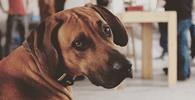 Presença de cachorro em local de trabalho e condições inadequadas geram indenização