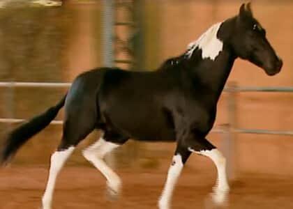 """TJ/SP concede """"HC"""" a cavalo em isolamento sanitário por suspeita de doença contagiosa"""
