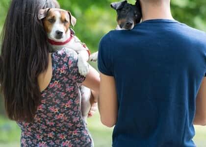 Após divórcio, ex-cônjuges ficarão cada um com a guarda de um cão