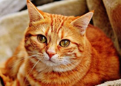 Mulher que abrigou 150 gatos abandonados a pedido do município será indenizada