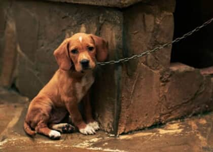 Projeto de lei proíbe pessoa de reaver guarda de animal vítima de maus-tratos